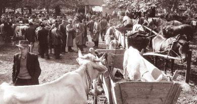 Bridka in zelo pogosta kmečka zgodba